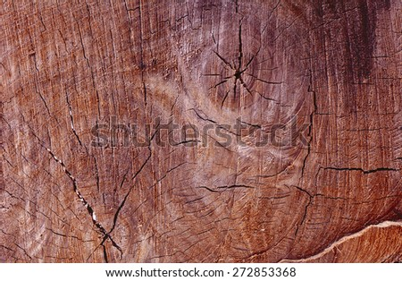 Old texture tree - stock photo