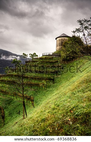 old tower and vineyard - stock photo