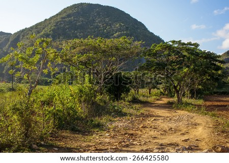 old trail hiking between trees on the mountain background - stock photo