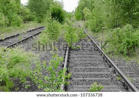 Old train yard and its tracks in black and white rampaged by young Birch in green color.