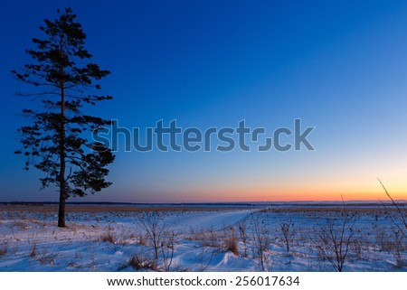 Old tree against the sky with sunset. - stock photo