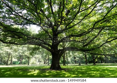 old tree and sumbeams in berlin tiergarten in summer - stock photo