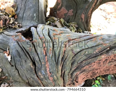 Old tree bark and stump for background/wallpaper with copy space for text design
