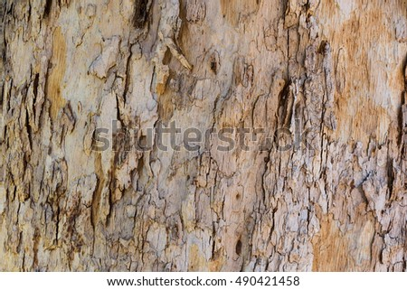 old tree bark for nature background use