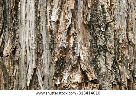 Old tree bark natural texture background. - stock photo