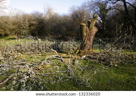 Old tree cut down in a wood - stock photo
