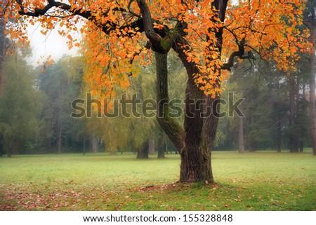 Old tree in fog in autumn - stock photo