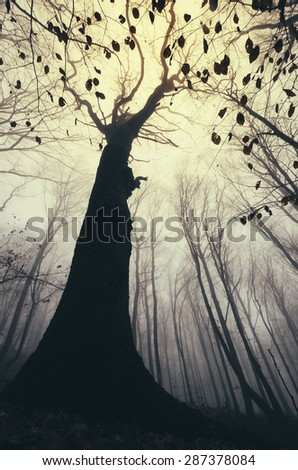 old tree in forest in autumn - stock photo