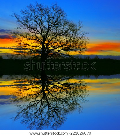 old tree in night with water reflection - stock photo