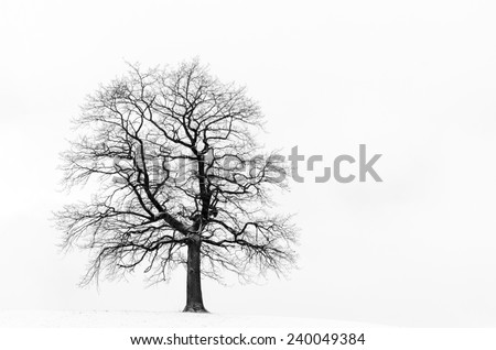 Old tree isolated on white background photographed near Wolfratshausen, Bavaria, Germany