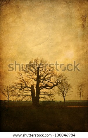 old tree of an alley with an attractive grunge background texture