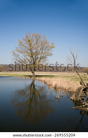 Old tree on the bank of the river  against the blue sky - stock photo