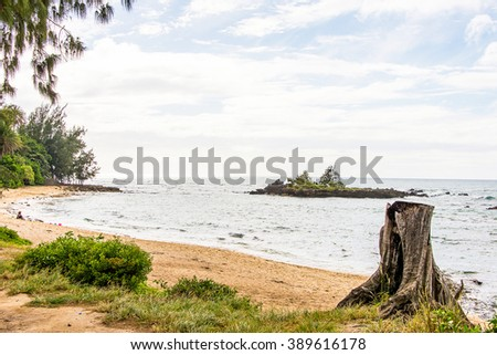 Old tree on the beach by the Pacific ocean on the island of Oahu, Hawaii. - stock photo