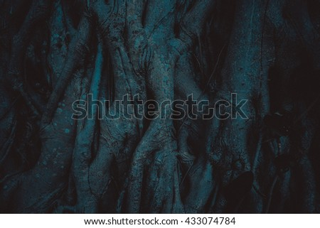 Old tree  roots closeup in the darkness. Miami, Usa, Florida, Key Biscayne. USA  - stock photo