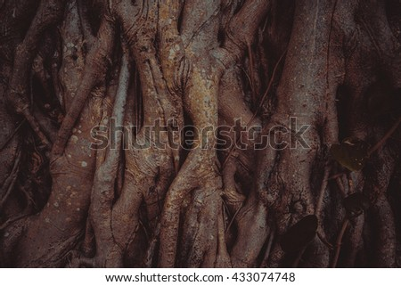 Old tree  roots closeup in the shadow. Miami, USA, Florida, Key Biscayne. USA  - stock photo