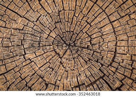 Old tree stump background.