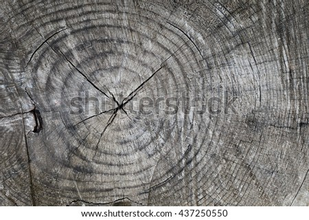 Old tree stump background,weathered wood texture with the cross section of a cut log - stock photo