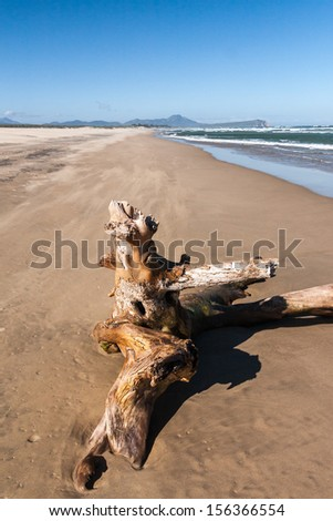 Old tree stump on a tropical beach - stock photo