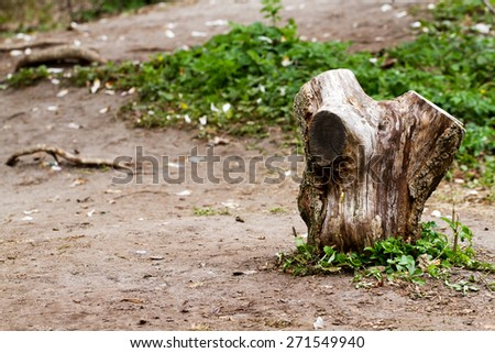 Old tree stump on the lawn in the forest