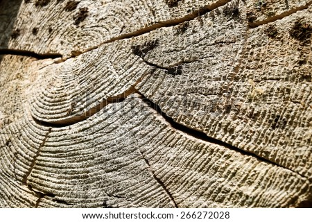 Old tree stump showing age lines. - stock photo