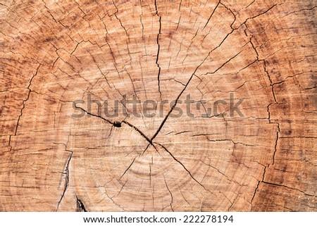 Old tree stump surface - stock photo