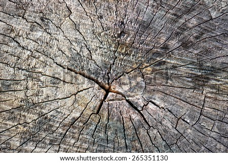 Old tree stump surface with cracks and fractures radiating from the center - stock photo
