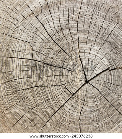 Old tree stump texture or background - stock photo