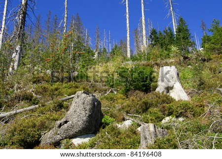 Old tree stumps in a dead forest - stock photo