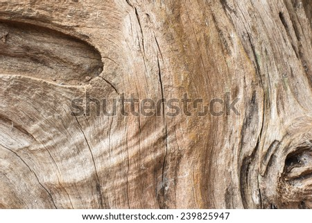 old tree texture background
