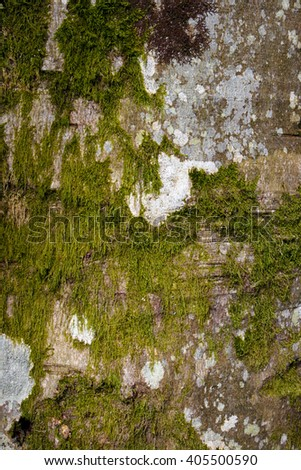 Old tree trunk covered in lichen and moss