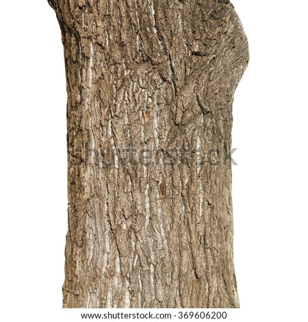 old tree trunk, weeping willow tree isolated on white background - stock photo