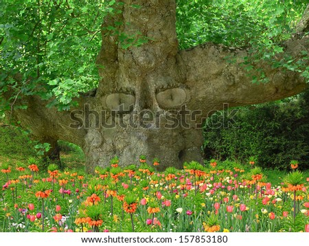 old tree with eyes, keeper of the garden - stock photo