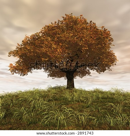 old tree with yellow leaves - stock photo