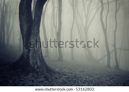 old trees in a forest with fog - stock photo