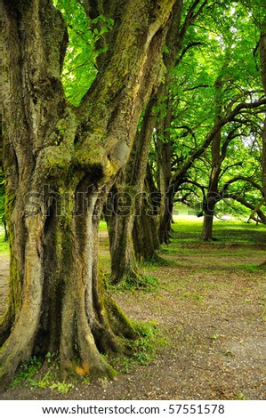 old trees in national park of Cork (Ireland)