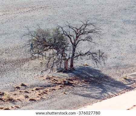 Old trees near the sand Dune #45 in the Sossusvlei plato of the Namib Naukluft National Park - Namibia, South Africa