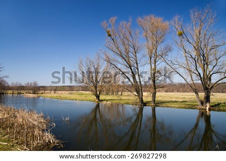 Old trees on the bank of the river  against the blue sky - stock photo
