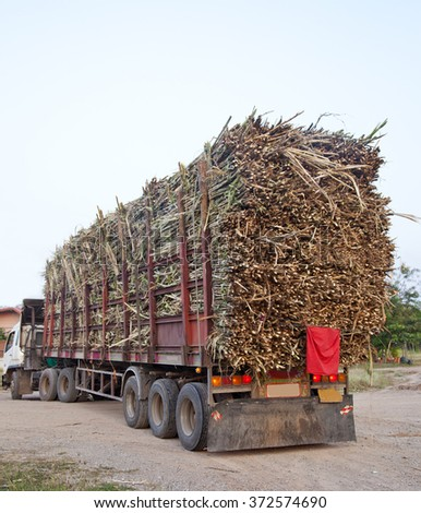 Old truck transporting sugar cane to the factory - stock photo