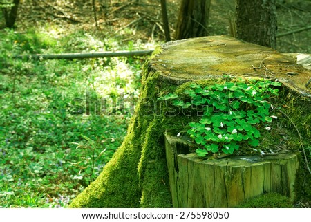 Old trunk dark wood with green moss and forest wild flowers - stock photo