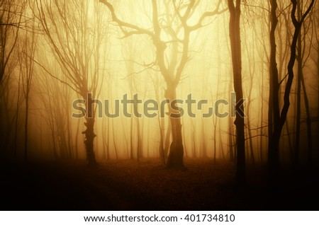 old twisted tree at sunrise in the woods - stock photo
