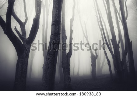 old twisted trees in a spooky dark forest - stock photo