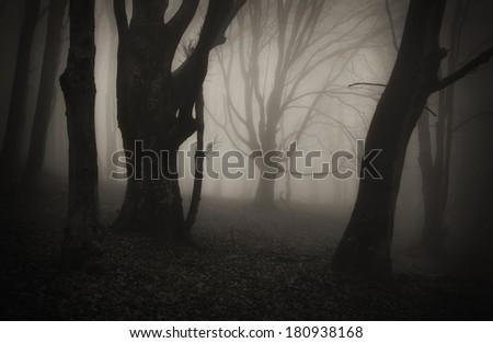 old twisted trees in dark forest