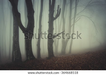 old twisted trees in misty forest - stock photo