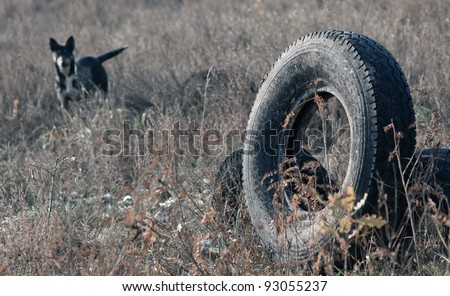 old used tyre and dog - stock photo