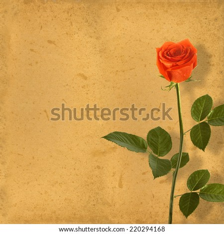 Old vintage card with a beautiful red rose on paper background.  - stock photo