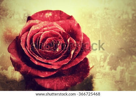 Old Vintage Grunge background with red rose - stock photo