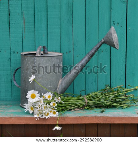 Old watering can with daisy flowers on green planks, rural vintage still life - stock photo