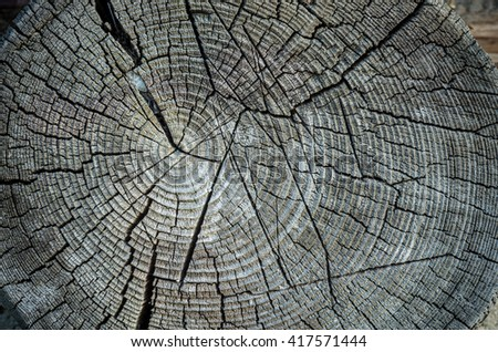 Old weathered spruce tree trunk - stock photo