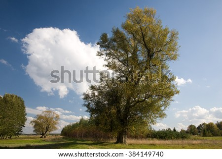 Old Willow tree against blue cloudy sky,Podlasie Region,Poland,Europe - stock photo