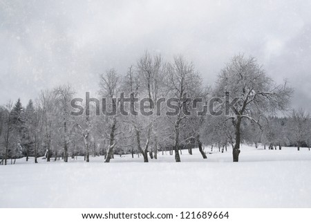 Old winter apple tree orchard with the snowfall. - stock photo